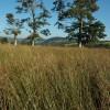 Trees near Ty-Forris