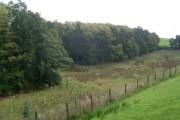 Woodland by the Carmunnock Bypass