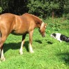 Horse and hound - a friendly encounter
