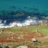 Ancient field boundaries below Escalls Cliff