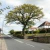Oak tree, Christchurch Road, Newport