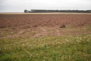 Ploughed fields by Auchmithie