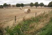 Round bales, Kirkside