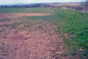 Grassland at Bilfield Farm