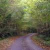 Chilsham Lane in Autumn