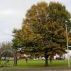 Mosley Common