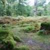 Dewerstone Wood