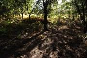 Open woodland, Bourne valley