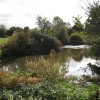 Pond near New Milverton allotments