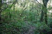 Footpath in Hawthorn Dene