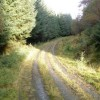 Track in Dalmally Forest