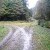 Junction in the forest track Dalmally