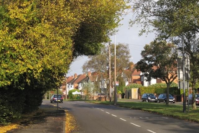 Bus-pruned tree, Cubbington Road, New Cubbington