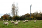 Sheep field and mobile phone mast beside the lane to Lawford