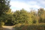 Woodland in Bedfords Park