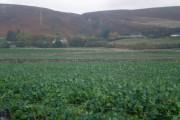 Farmland by East Clyne