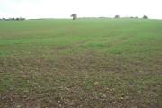 Fields north of Hanwood, Shropshire