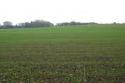 Farmland near Pocklington