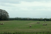 Swiss rolls in a field near Leighton
