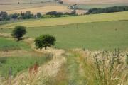 Farmland, Bishops Cannings