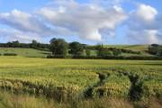 Farmland, Blacklands