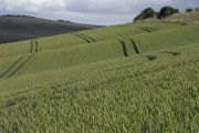 Farmland, Calstone