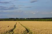 Farmland, Wootton