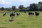 Pasture, Bishops Cannings