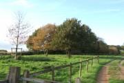 Killerton Park