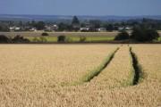 Farmland, Marsh Baldon