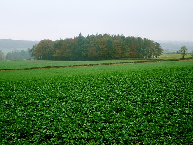 Woodland west of Tees Farm