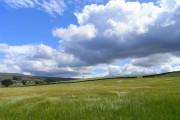 Farmland near Renwick