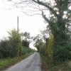 Hedgerow beside Ferry Road