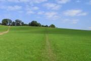 Pasture at Wooburn