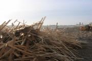 Wood clearance,  Brighton