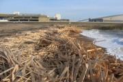 Wood spill at Brighton Marina