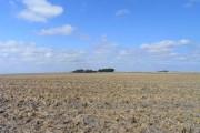 Farmland, Wantage