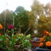 Tea Room Flowers