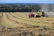 Harvest, Childrey