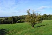 Pasture, Letcombe Regis