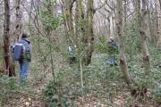 Surveying woodland in Pound Wood