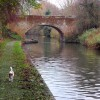 Looking east to bridge 36, Grand Union Canal