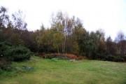 Woodland at Shotover Country Park
