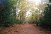 The Wealdway in Five Hundred Acre Wood