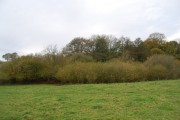 Woodland on the edge of the Medway's flood plain