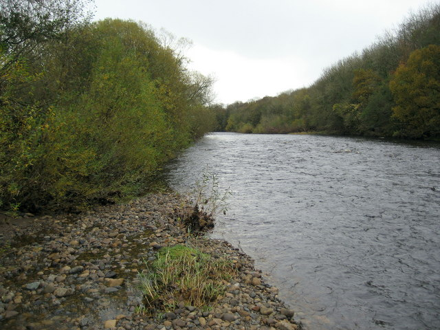 River Tees near Manfield
