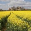Leiston Abbey in Springtime