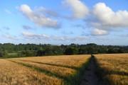 Footpath through barley, Hambledon
