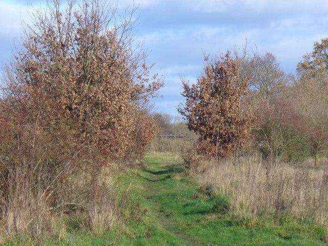 Footpath near Bisley