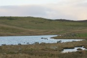 Loch of Houlland, South Nesting